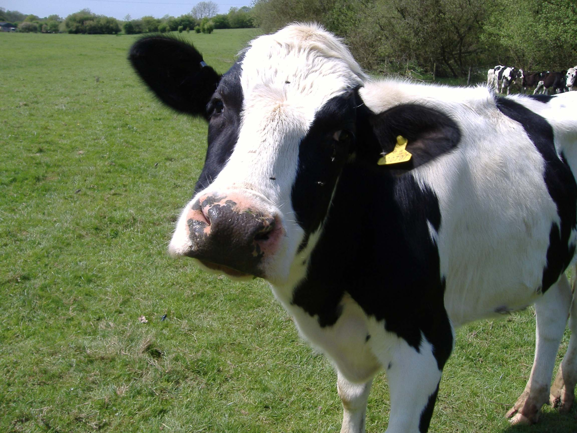 Declining radius, COW, Fixation and more…