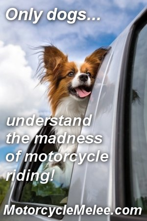 Only Dogs Understand the Madness of Motorcycle Riding